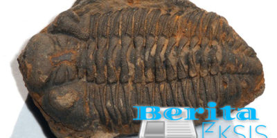 Fosil Trilobita